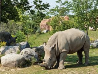 Toronto Zoo – главный зоопарк Канады