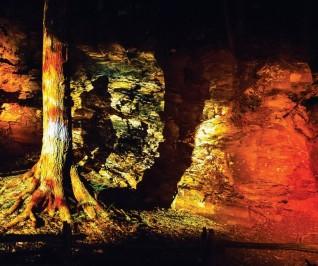 Волшебный лес Foresta Lumina