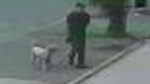man rubs dog feces on synagogue door