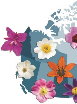 От берега до берега. Цветочные символы канадских провинций.