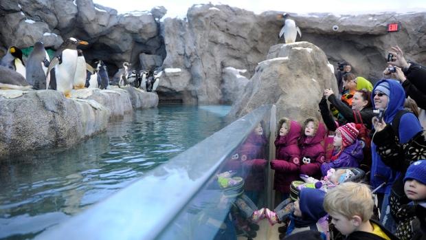 Взоопарке вКанаде утонули семь пингвинов