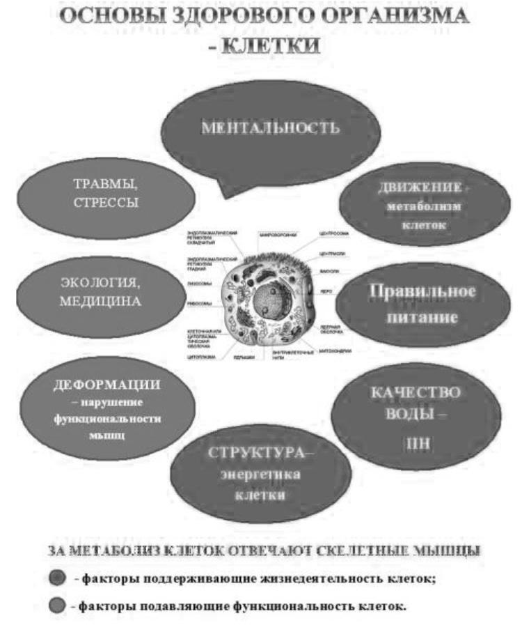 статины дозировка и инструкция