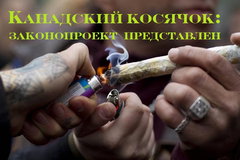 Как определить что знакомый курит марихуану