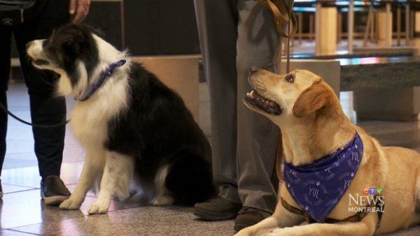 Нервных пассажиров успокаивают собаки