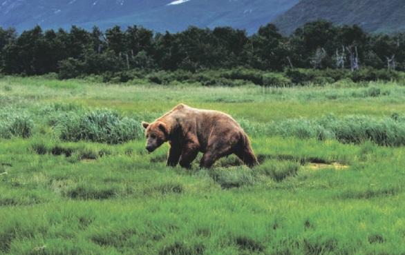 Grizzlyland. Mедвежий рай
