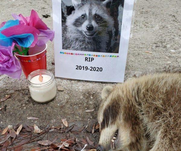В Торонто снова возвели мемориал погибшему еноту